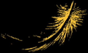 ahlkavohara_feather5